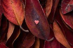 De stapel van Donkerrode Bladeren met Klein Hart vormt Roze Sugar Candy op Bovenkant Rich Vibrant Crimson Color De Valentijnskaar Royalty-vrije Stock Foto's