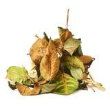 De stapel van droog nam bladeren toe als abstracte samenstelling over witte achtergrond Royalty-vrije Stock Afbeelding