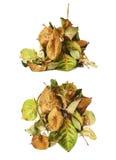 De stapel van droog nam bladeren toe als abstracte samenstelling over witte achtergrond Stock Fotografie