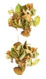 De stapel van droog nam bladeren toe als abstracte samenstelling over witte achtergrond Stock Foto's