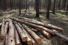 De stapel van gesneden pijnboom opent het bos het programma Stock Afbeelding