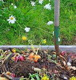 De stapel van het compost met madeliefjes stock afbeeldingen
