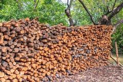 De stapel van het mangrovehout royalty-vrije stock fotografie
