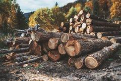 De stapel van hout opent een bos het programma royalty-vrije stock afbeeldingen