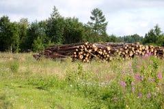 De stapel van timmerhout op het gebied stock afbeelding