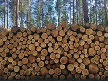 De stapel van vers gesneden hout opent bos het programma - registreren, bosbouw stock afbeelding