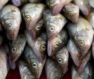 De Stapel van vissen Stock Fotografie