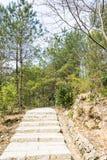De stappen van de steen Stock Foto
