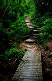 De stappen van de wildernis stock foto's