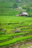 De stapterras van de rijst in Vietnam Royalty-vrije Stock Fotografie