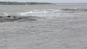 De starka vågorna av det vita havet lager videofilmer