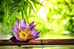 De station thermale toujours la vie avec le flotteur de lotus sur l'eau Photo libre de droits