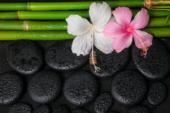De station thermale toujours la vie des fleurs blanches et roses de ketmie et du bambo naturel Photo libre de droits