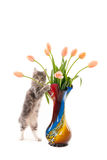De status van katje met tulpen in een vaas Royalty-vrije Stock Foto