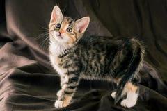 De status van kleurrijk katje op donkere bruine deken Royalty-vrije Stock Foto