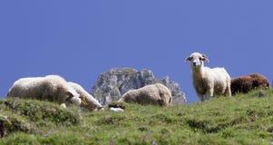 De status van schapen Stock Foto's