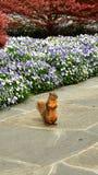 De status van wilde eekhoorn met bloeiende bloemen en boomachtergrond royalty-vrije stock afbeeldingen