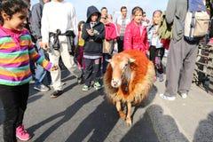 de 37ste Marathon van Vodafone Istanboel Stock Fotografie