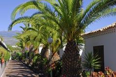 De steeg met palmen Royalty-vrije Stock Foto