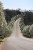 De steeg Nashville van de lente stock afbeelding