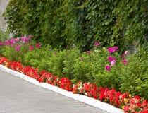 De steeg van de bloem Royalty-vrije Stock Foto