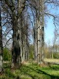 De steeg van de boom stock foto