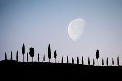 De steeg van de cipres onder het maanlicht Stock Foto's