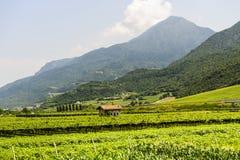De steeg van de cyclus van de vallei Adige stock fotografie