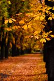 De steeg van de herfst royalty-vrije stock foto's