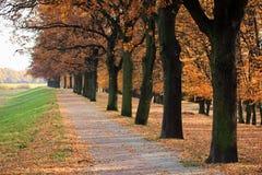 De steeg van de herfst Stock Fotografie