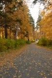 De steeg van de herfst bij park royalty-vrije stock foto