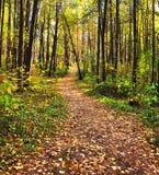 De steeg van de herfst die met bladerenachtergrond wordt behandeld Royalty-vrije Stock Afbeeldingen