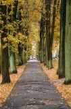 De steeg van de herfst in een stad Stock Foto's