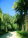 De Steeg van de palm Royalty-vrije Stock Foto