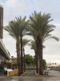 De steeg van de palm Royalty-vrije Stock Afbeelding