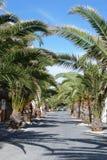 De steeg van de palm Royalty-vrije Stock Afbeeldingen