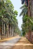 De steeg van de palm in een tropische tuin Royalty-vrije Stock Afbeeldingen
