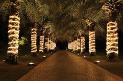 De steeg van de palm in nachtverlichting Stock Foto