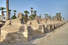 De steeg van de sfinx in Luxor Stock Afbeeldingen