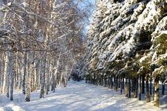 De steeg van de winter Royalty-vrije Stock Foto's