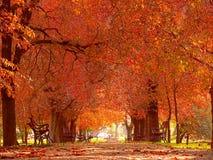 De steeg van het park in de herfst Stock Afbeeldingen