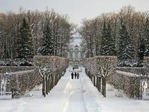 De steeg van het park in de winter Stock Foto