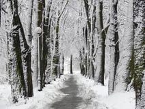 De steeg van het park die met sneeuw wordt behandeld stock fotografie