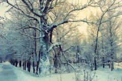 De steeg van de de stadswinter van het de winterlandschap stock afbeelding