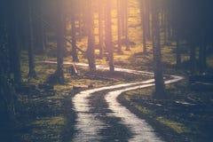 de steegweg van het land in bos Royalty-vrije Stock Foto