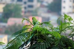 De steek van de papegaaivogel op boom Royalty-vrije Stock Afbeelding