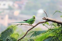 De steek van de papegaaivogel op boom Stock Afbeeldingen