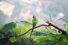 De steek van de papegaaivogel op boom Royalty-vrije Stock Fotografie