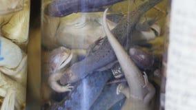 De steekproef van verschillende amfibieen in de reageerbuis - van museum richt op, sluit uiterst omhoog stock video