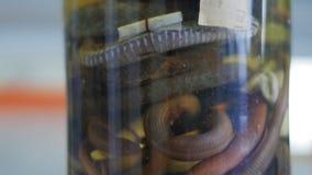 De steekproef van verschillende slangen in de reageerbuis, sluit omhoog stock footage